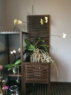 I think many orchids are pretty adaptable, especially hybrid phalaenopsis (havent tried doing this to other orchids). But this is just my opinion, and Water Culture Orchids, Orchids In Water, Garden Plants, House Plants, Orchid Plants, Orchid Care, Vases Decor, Garden Landscaping, Ladder Decor