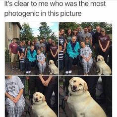 """37 Amusing Memes That Are Sure To Entertain The Procrastinators - Funny memes that """"GET IT"""" and want you to too. Get the latest funniest memes and keep up what is going on in the meme-o-sphere. Funny Animal Jokes, Funny Dog Memes, Really Funny Memes, Funny Animal Pictures, Cute Funny Animals, Funny Relatable Memes, Animal Memes, Funny Cute, Funny Dogs"""
