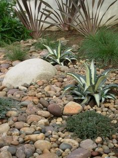 "Rock Garden Ideas. On top of the ""hidden"" in-ground infiltration system, the river-rock is interspersed with Agave americana 'Varietgata' and 'Icee Blue' spreading juniper (Juniperus horizontalis 'Icee Blue')."
