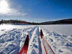 Missoula Montana Cross Country Skiing, Nordic / X-Country University Of Alberta, Skiing Colorado, Colorado Trip, Celiac Disease, Cross Country Skiing, Winter Activities, Seasons Activities, Olympians, Adventure