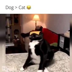 ✔ Animals And Pets Dogs Videos Funny Animal Memes, Cute Funny Animals, Funny Animal Pictures, Cute Baby Animals, Cat Memes, Funny Cute, Funny Dogs, Animals And Pets, Cute Cats