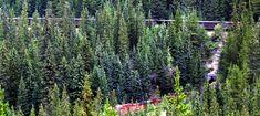 Alberta & BC Rockies Visitor Tips Banff Alberta, Spiral, Tips, Plants, Travel, Viajes, Traveling, Flora, Plant