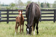 Zenyatta Delivers a Candy Ride Filly Zenyatta Horse, Thoroughbred, Beautiful Horses, Beautiful Day, Barn Stalls, American Pharoah, Farm Photo, Horse Quotes, Horse Racing