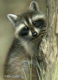 Αποτέλεσμα εικόνας για raccoon  feet clipart