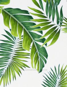 Fabric Banana Leaf Palm Fronds Green Leaves White Background Cotton Material for Fashion Apparel Crafts Home Decor HCN10764  45Wide