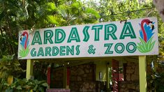 Flamingoes, Abaco Parrots and Iguanas can be found at the Adastra Zoo. Nassau, Bahamas Conservation, Flamingo, Nassau Bahamas, Neon Signs, Parrots, Gardens, Culture, Art, Flamingo Bird