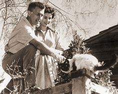 Stewart Granger and Jean Simmons with a Himalayan Cat. The first long haired pointed cats were crosses between Persian cats and Siamese. They are not classed as Siamese cats