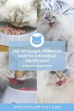 Jak przebiega pierwsza wizyta u kociego dietetyka? Jakie badania powinno się wykonać? O kociej dietetyce i badaniach rozmawiałam ze zwierzęcą dietetyczką Agnieszką Cholewiak-Góralczyk. Apollo, Personal Care, Cats, Animals, Self Care, Gatos, Animales, Animaux, Personal Hygiene