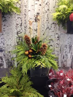 Spruce tip pot for your home!