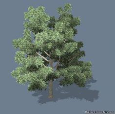 A Tree 3d model free