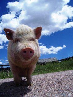 Sweet Bernadette, Kindness Ranch