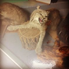 #thatmoment when the taxidermist put your arm on wrong... #oops #wtf