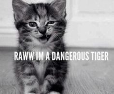 The only thing that matters is how you see yourself! #tigerkitty #raww #toocute #cats