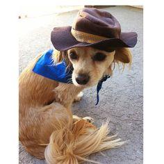 Custom Cowboy Hat and Bandana Pet Halloween Costume  by PawApparel