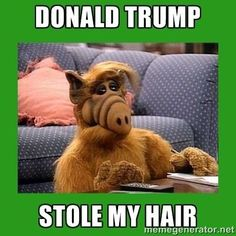 16 Donald Trump Hair Memes So Funny You'll Actually Be Grateful He's Running For President | Bustle