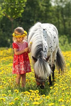 Pony of the Americas and little girl in a field of yellow flowers.