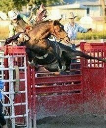 Rodeo Cowboys, Real Cowboys, Rodeo Time, Cowboy And Cowgirl, Horse Pictures, Long Live, Cowgirls, Cows, Ponies