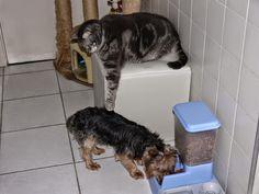 Pets Patinhas: É a minha comida!   Tibi está é minha comida!   Sa...
