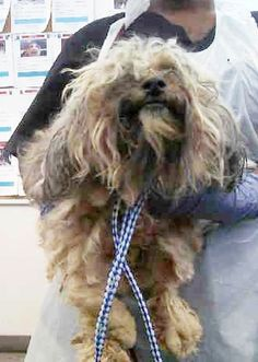 4/18- UPDATE 4/12/15 Adopted per OPCA.SHELTER conf'd w/shelter.4 /2/15 PRESUMED SAFE. Transf to PetsMart for haircut and adoption.4/2/15 under that hair is a beauty ID #A881224-1 PUPPY ALERT!!!‒Name is TINY. Wht vPoodle A1031347 Stand. aprox 1 yr 6 mths old at the shelter in 3/29/15 Dallas Animal Services & Adoption Tel(214) 670-8246 Dallas https://www.facebook.com/OPCA.Shelter.Network.Alliance/photos/pb.481296865284684.-2207520000.1427964142./800503440030690/?type=3&theater