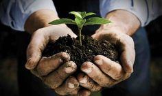 """Agricoltura biodinamica: favoriamo il ciclo chiuso nel nostro orto-giardino!  """"l'agricoltore biodinamico è un produttore di Salute"""" ( Rudolf Steiner)"""