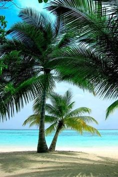 Beautiful Islands, Beautiful Beaches, Beautiful World, Vacation Trips, Dream Vacations, Places Around The World, Around The Worlds, Palmiers, I Love The Beach