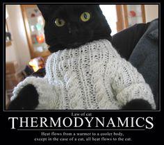 Cat Law of Thermodynamics