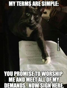 Worship me contract