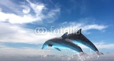 Sold! Stock photo: Couple Of Dolphins Jumping Against The Blue Sky © eZeePics Studio  From $1.50