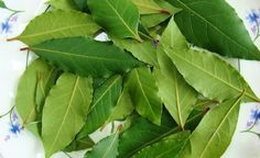 Bay Leaves are terrific for spells cast to bring victory in athletic competition. Bay Leaves also removes negative energy, protects health and gives an impetus to careers and matters of the heart. Health Remedies, Home Remedies, Chest Infection, Art Rose, Laurus Nobilis, Laurel Leaves, Varicose Veins, Medicinal Herbs, Garden Types