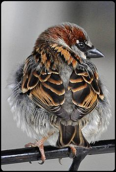 Great detailed view of bird's feathers resting on its back Pretty Birds, Love Birds, Beautiful Birds, Animals Beautiful, Beautiful Creatures, Beautiful Pictures, Small Birds, Little Birds, Colorful Birds