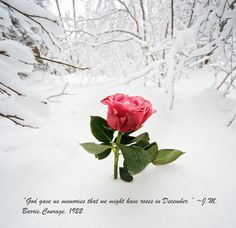 """""""God gave us memories that we might have roses in December."""" ~ J.M. Barrie, Courage, 1922 #talkofalifetime"""