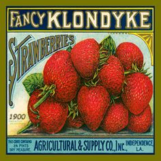 Klondike Strawberries Canning Label 1900. Quilt Block printed on cotton with Hot Pad Pattern. Ready to sew.  Single 4x4 block $3.95. Set of 4 blocks with pattern $14.95.