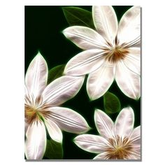 'White Clematis' by Kathie McCurdy Photographic Print on Wrapped Canvas