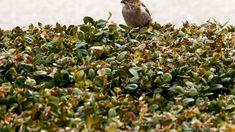 Im Rahmen der diesjährigen Birdlife-Vogelzählung haben über 4500 Personen Familien und Schulklassen über 136'000 Vögel aus insgesamt 163 Arten beobachtet. Diese Volkszählung der Gartenvögel in der Schweiz wird seit 2014 durchgeführt.