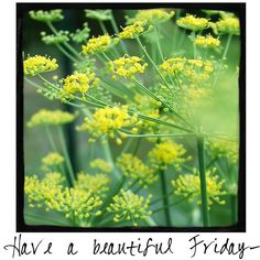 Have a Beautiful Friday!