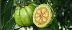 Lipo-G3 Garcinia Cambogia..  I want to try this.