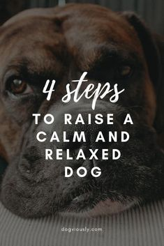 4 steps t raise a calm and relaxed dog. Regardless of the bread or age, it is possible to train any dog to be calm and relaxed. These simple and effective training techniques will have your pooch sleeping while your playing tennis in no time. Puppy Training Tips, Training Your Dog, Training Collar, Agility Training, Dog Agility, Training Pads, Brain Training, Training Equipment, Training Kit