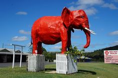 """Located at 4138 Warrego Highway in Hatton Vale, Queensland. Part of the """"Jumbo"""" shopping centre. Aussie Australia, Australia Funny, Australia Beach, Iconic Australia, Australia Travel, Cool Countries, Countries Of The World, Red And Yellow Flag, Vampire Circus"""