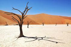Deadvlei is a photographers dream. Not that I'm really a photographer.  #sossusvlei #Namibia #namibdesert
