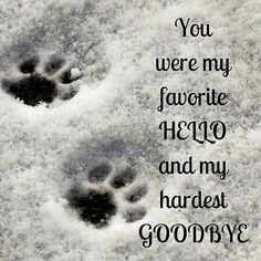 Ideas for rip pet quotes cat rainbow bridge Pet Quotes Cat, Animal Quotes, Pet Loss Quotes, I Love Dogs, Puppy Love, Dog Heaven Quotes, Dog In Heaven, Miss My Dog, Pet Loss Grief