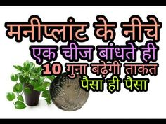 Money plant direction plant benefits and care Meditation In Hindi, All Mantra, Mantra Tattoo, Diy Clothes Life Hacks, Sanskrit Mantra, Money Plant, Hindu Mantras, Gym Workout For Beginners, Tejidos