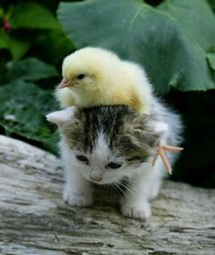 25 Adorable baby animal pictures (25 pics)