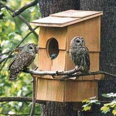 Owl house Owl Nest Box, Owl Box, Bird House Feeder, Bird Feeders, Bird House Plans, Screech Owl, Barred Owl, Bird Houses Diy, Homemade Bird Houses