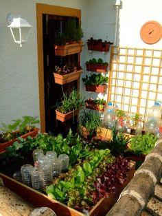 21 variedades de ervas e hortaliças plantadas em pouco mais de 1 m2.