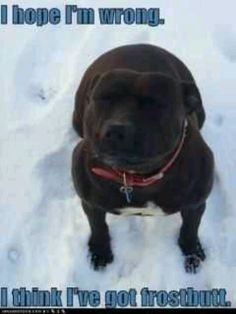 This dog looks almost identical to my dog. But we live in AZ where there is no snow. Lol