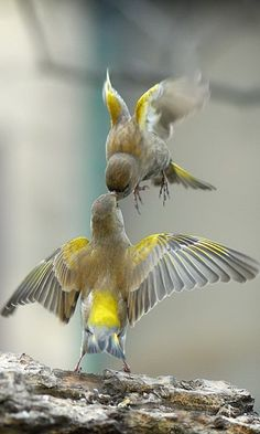 birds, feedingtime