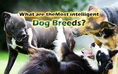 What are theMost Intelligent Dog Breeds?  https://thepuppyplace.org/what-are-themost-intelligent-dog-breeds.html