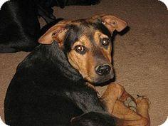 Tempe, AZ - Shepherd (Unknown Type) Mix. Meet Kiara a Dog for Adoption.