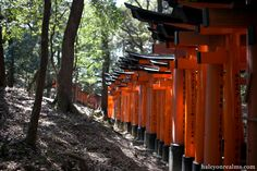 Located just 5 minutes away by train from Kyoto station is the Fushimi Inari Taisha, a Shinto shrine known for its famous Senbon Torii (thousand gates). The number is figurative of course – there are actually more than 20000 Torii gates in and around the shrine. (above & below) A giant Ema board located near …