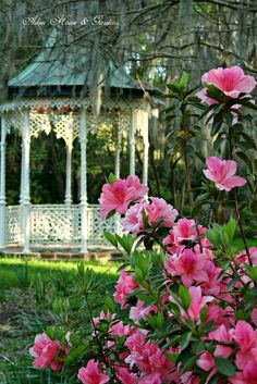 Gazebo Spanish moss and azaleas. Pink Garden, Dream Garden, Garden Art, Home And Garden, Rainbow Garden, Garden Painting, Garden Ideas, Prado, Gazebos